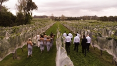 Danielle & Joel - Drone Photos - Clearview Estate Napier: 16844 - WeddingWise Lookbook - wedding photo inspiration