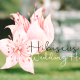 Hibiscus Wedding Hire